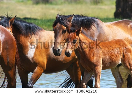 Horses with a young foal near the river