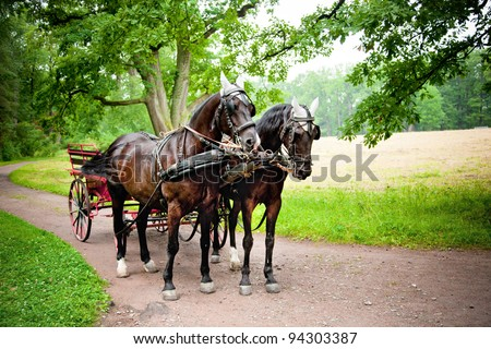 Horses with carriage on the alley of Tsarskoe Selo (Pushkin), Russia - stock photo
