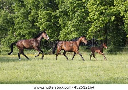 Horses with foal running on a green pasture in the sun - stock photo