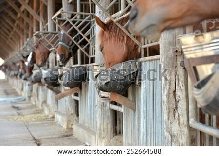 Horses with food tray  - stock photo