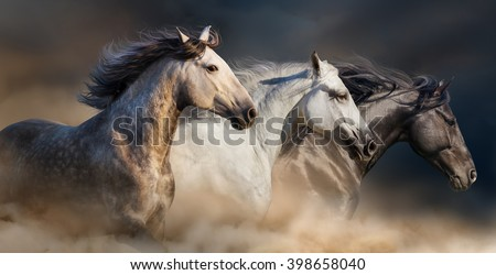 Horses with long mane portrait run gallop in desert dust - stock photo