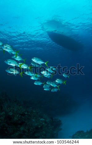 Horseye Jacks with boat silhouette - stock photo