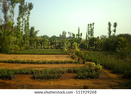 Horticulture (floriculture) in India: vegetable garden in early spring. Culture in pots, farming enterprise. India, Tamil Nadu