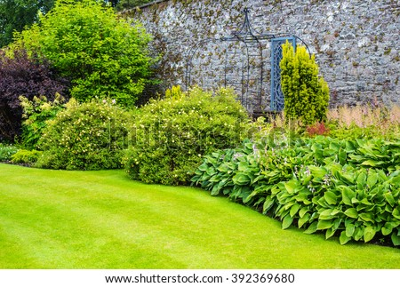 Hosta plants in the walled garden  - stock photo