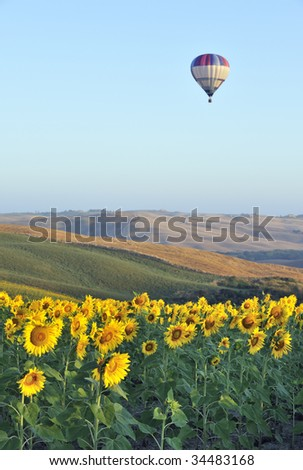Hot-air balloon flying over field of sunflowers in tuscany, italy