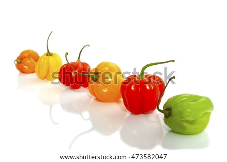 Hot colorful chili peppers in a row isolated over white