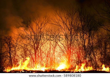Burned Forest Stock Images, Royalty-Free Images & Vectors ...