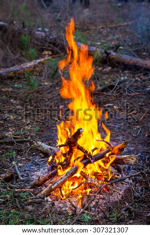 hot fire in forest tourist camp