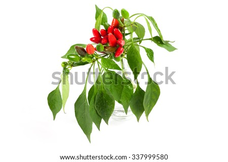 hot peppers in jar - stock photo
