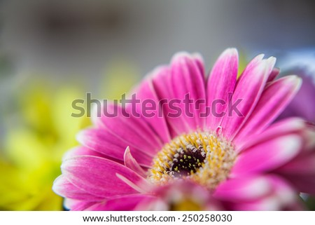 hot pink flower close up with a blurred background and yellow flowers arrangement - stock photo