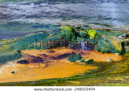 Hot spring in Waimangu Volcanic Valley with acid flowing water, deposits of colorful silica mineral mixed with algae. New Zealand, Rotorua region. - stock photo