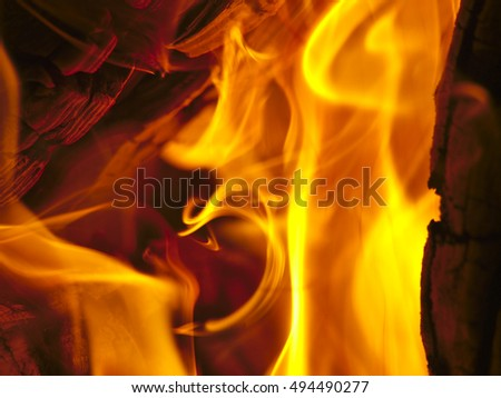 Hot yellow flames closeup isolated. Burning campfire background.