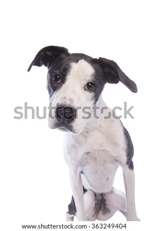Hound Dog looking head shot isolated - stock photo