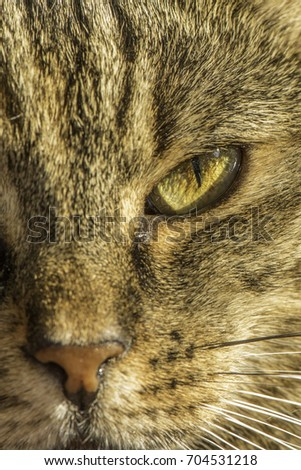 house cat close up