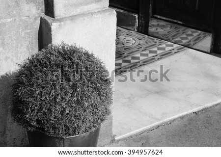 House entrance with tiled floor and potted plant outside. Games of light and shadow. Aged photo. Black and white. - stock photo