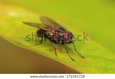 house fly - stock photo