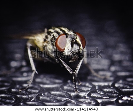 House fly sits on my cutting board - stock photo