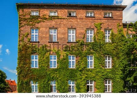 house, gardening, summer, sunny weather, windows - stock photo