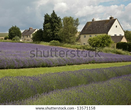 House in lavender field