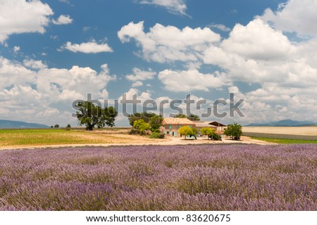 House in the French Lavender fields in the Provence - stock photo