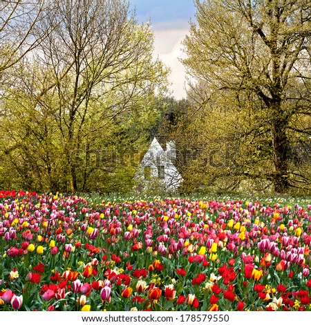 House of spring flowers and trees. Spring landscape. - stock photo