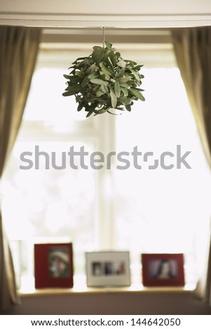 House plant hanging from ceiling - stock photo