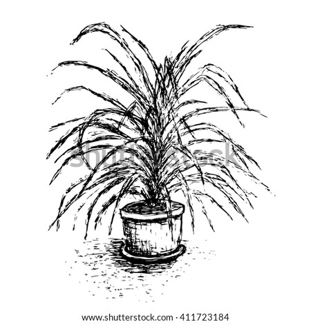 House plant in flower pot isolated on white background. Palm tree ink sketch. Hand-drawn design elements. Black and white illustration. - stock photo
