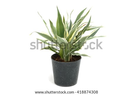 House plant in potted isolated on white background - stock photo