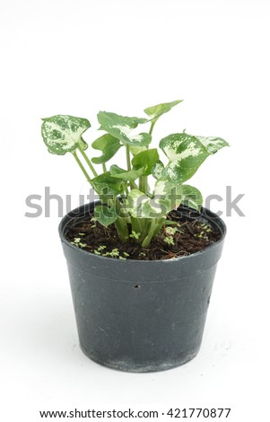 House plant in potted isolated on white background