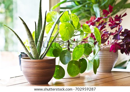 Indoor Plants Stock Images Royalty Free Images Vectors