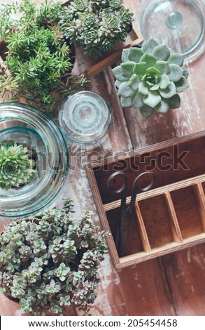 House plants, green succulents, old wooden box and blue vintage glass bottles on a wooden board, home gardening and decorating rustic style. - stock photo