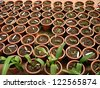 House plants in greenhouse - stock photo