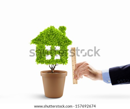 House shaped plant in pot measured with ruler - stock photo