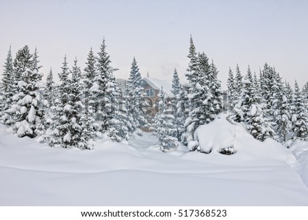 House under snow in winter wood chalet among spruce trees in the snow.
