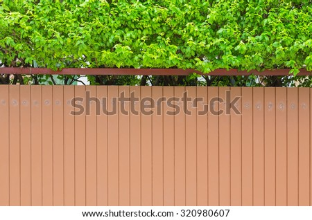 House wall with small green tree on top backdrop, outdoor