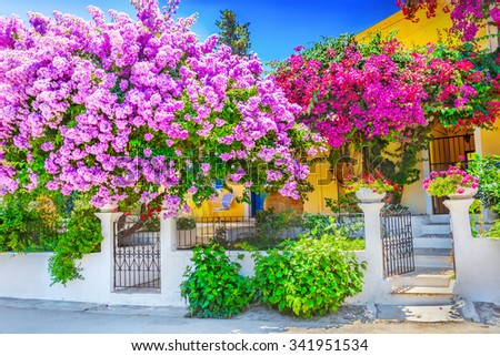 House with bougainvillea - stock photo