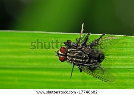 housefly mating in the parks