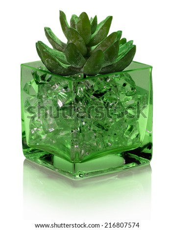 houseleeks in glass pot isolated on the white background - stock photo