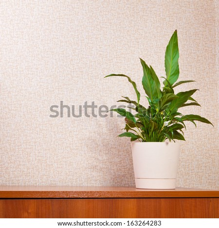 houseplant anthurium on a wooden board