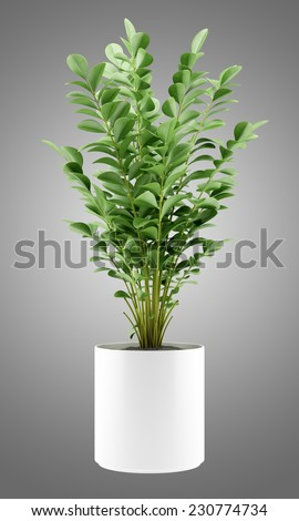 houseplant in pot isolated on gray background - stock photo
