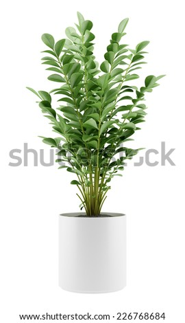 houseplant in pot isolated on white background - stock photo
