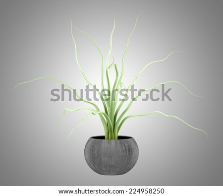 houseplant in wooden pot isolated on gray background