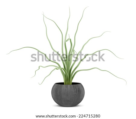houseplant in wooden pot isolated on white background