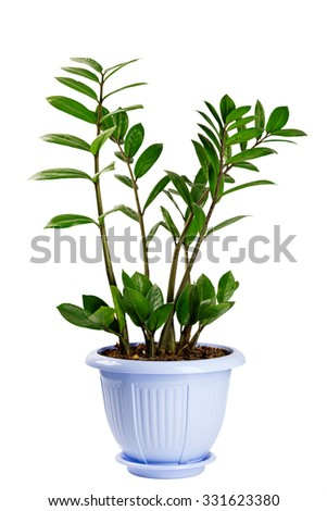Houseplant isolated on white background - stock photo