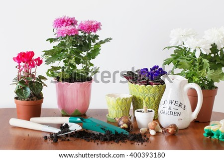 houseplants in a pot on the table - stock photo