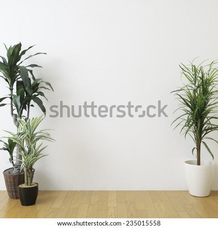 houseplants in the room - stock photo