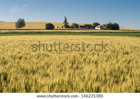 houses in the middle of wheat fields, france - stock photo