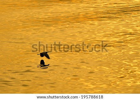 hovering over water - stock photo