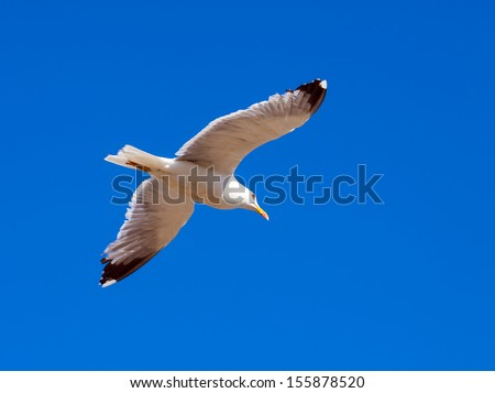 Hovering seagull against the sky
