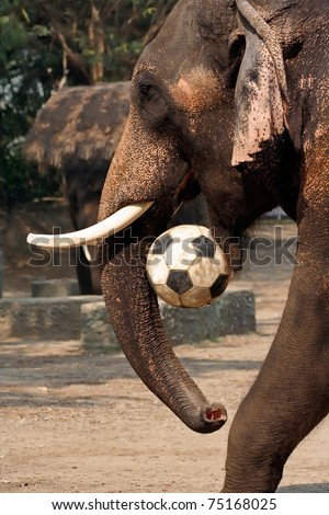 how does the elephant play soccer
